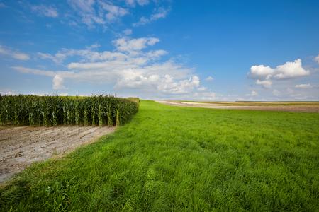 biomasa: Campo de maíz y el cielo con nubes hermosas  campo de maíz