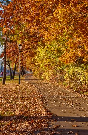 depth: Beautiful autumn park.  Fall trees and leaves. Autumn Landscape. Stock Photo
