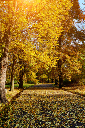 tiefe: Beautiful autumn park.  Fall trees and leaves. Autumn Landscape. Lizenzfreie Bilder