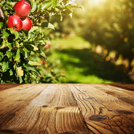 table space and apple garden of trees and fruits Foto de archivo