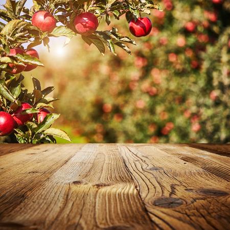 Tabellenbereich und Apfelgarten von Bäumen und Früchten Standard-Bild