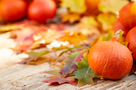 Thanksgiving border background. Autumn Fall background with colorful leaves,