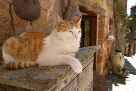 a lazy cat rests in an Italian town