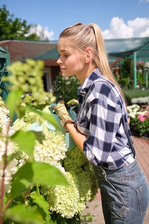 people, gardening and profession concept - happy woman or gardener taking care of flowers in greenhouse