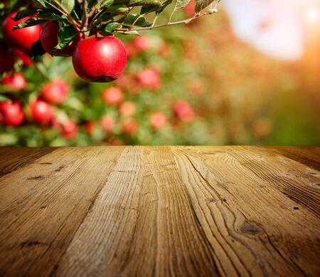 Tischfläche und Apfelgarten mit Bäumen und Früchten