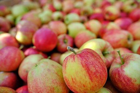 Large group of ripe red apples background