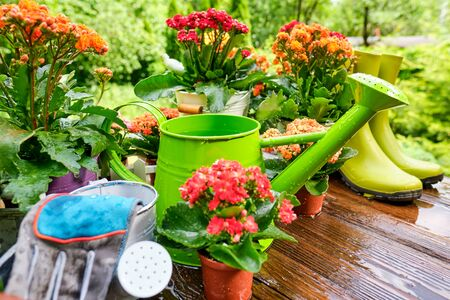 Spring plants and garden tools frame or border over rustic wood with copy space with gloves, watering can, flowerpots, soil, trowel and seedlings for transplanting