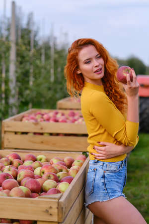 young woman cute blond girl smiling among red apples sun light flares of rays looking at camera on summer outdoor copy space background