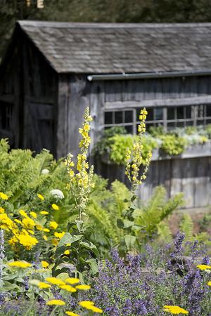 庭の小屋 写真素材