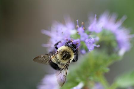 hint: Bee on Spirea