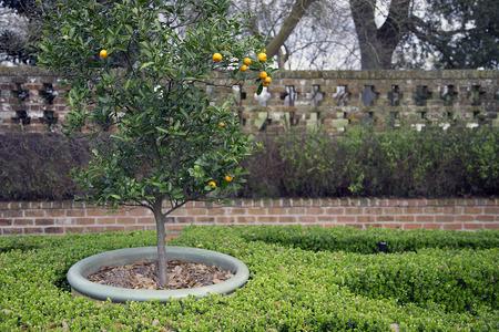 naranja arbol: Garden with orange tree Foto de archivo