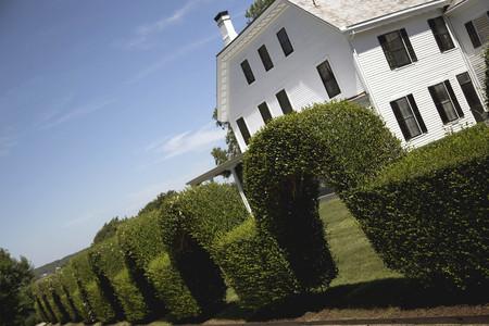 topiary: Garden with Topiary Stock Photo