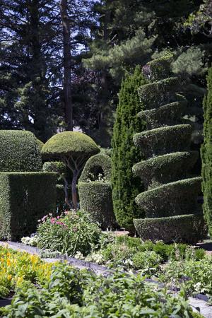 Tuin met Topiary Stockfoto