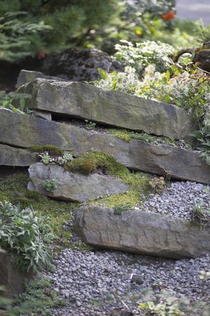 crevice: Crevice Garden
