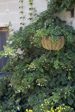 hanging basket: Container - Hanging Basket