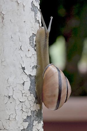 peeling: Snail on peeling paint Stock Photo