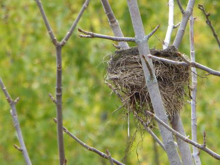 birder: Bird nest in a tree