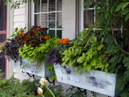 Container - window boxes