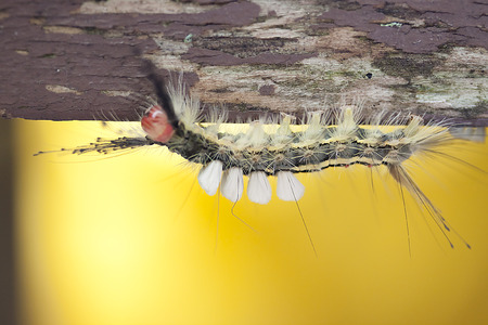 Insect - Caterpillar Stock Photo