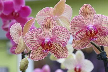 Pink and white orchids, Reklamní fotografie