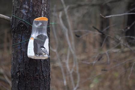 Bird Feeder - Homemade
