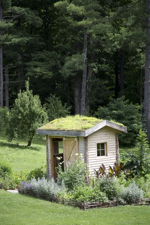 Garden Shed with Roof Garden