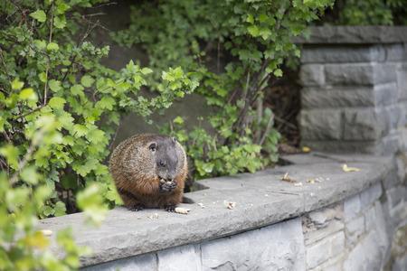 groundhog: Groundhog