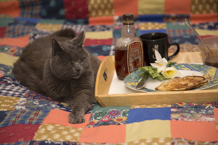 Breakfast with Cat