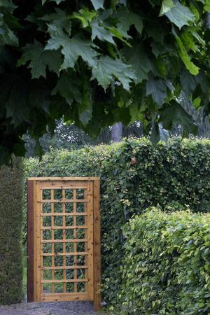 Overhangende boom en houten tuinhek met gaas patroon te midden van de heggen