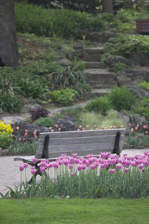 春の花と緑豊かな緑の芝生の中の庭のベンチ 写真素材