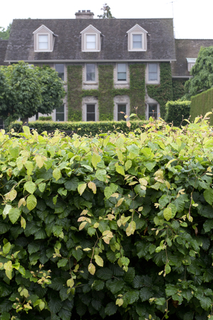 climbing frames: Lush hedge frames grand old house with climbing vines Stock Photo
