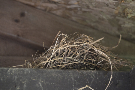 rafters: Nest of grass and hay tucked amoung the rafters of an old barn