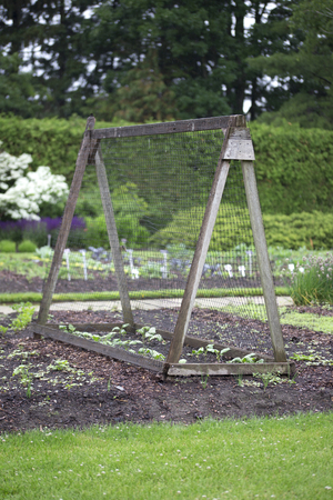 Beautiful vegetable garden with hedge, forest and pyramid plant support