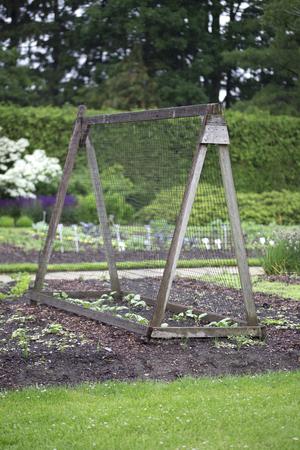 Mooie moestuin met haag, bos en piramide plant ondersteuning