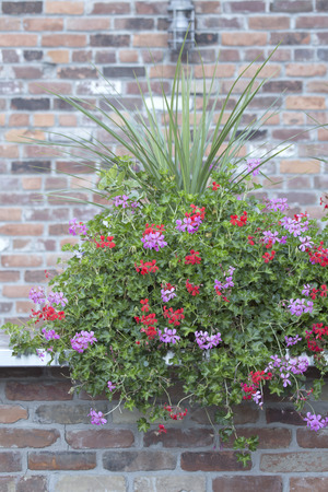 Flowers and Brick Wall Stock Photo