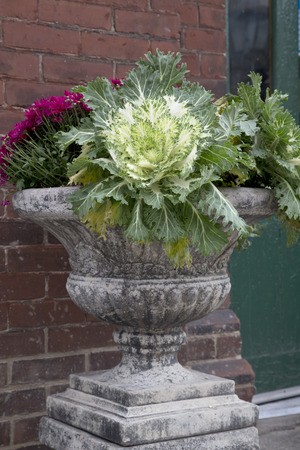 Fall Foliage in Urn