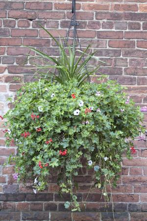 Hanging Basket and Brick Wall Stockfoto