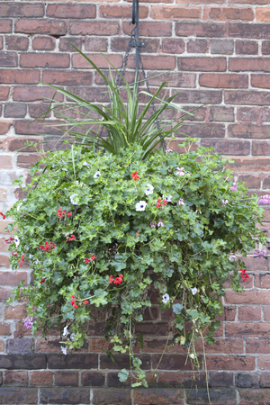 Hanging Basket and Brick Wall Stock Photo