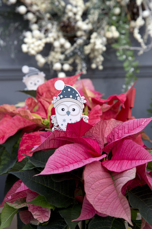 Owl, White Berry Wreath, and Red Christmas Poinsettia Stockfoto