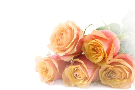 Five beautiful roses isolated over whte background photo