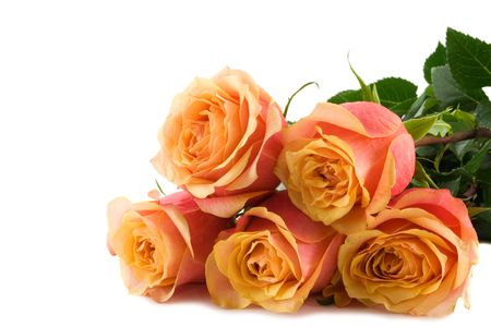 cetrino: Manojo de rosas aisladas en un fondo blanco  Foto de archivo