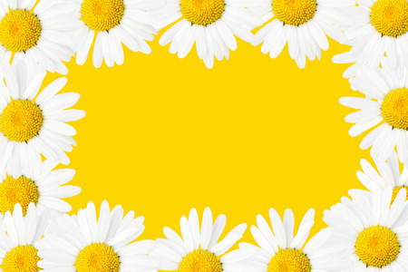 bloomy: Frame made from daisies over white background Stock Photo
