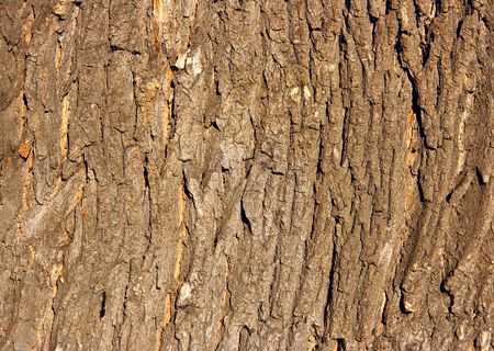 cracky: Bark of oak close-up, may be used as background