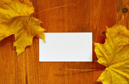 Maple leaves and blank card with space for your own text photo