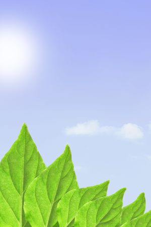 emerging economy: Green leaves, sky and sun, may be used as background