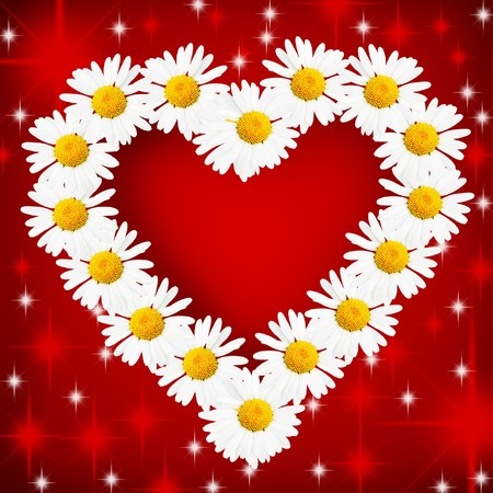 Daisy flowers arranged as the heart over red background photo