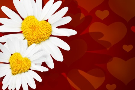 Two dasies with heart in center over red background Stock Photo - 4090884