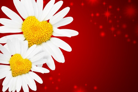 Two daisies with heart in center over red background photo