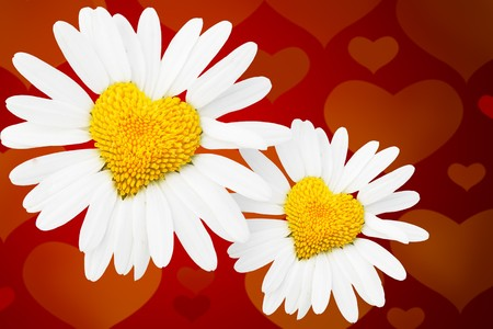compliments: Two dasies with heart in center over red background