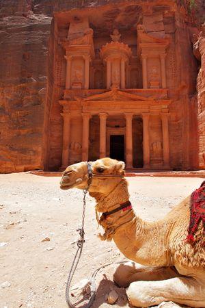 Camel near Treasury temple at Petra (Al Khazneh), Jordan photo